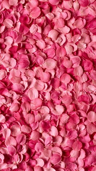 Pink petals iphone 5c 5s wallpaper wallpapers - Pink roses and hearts wallpaper ...