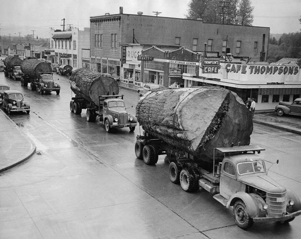 Trucks carrying mammoth Douglas fir logs pass through North Bend, Washington