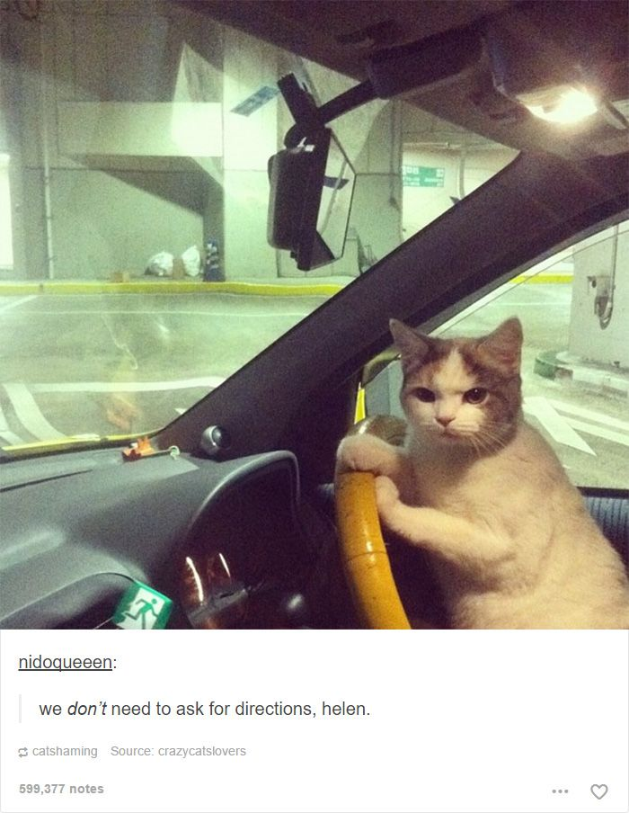 Best Dwellers Of The World Images On Pinterest Years - 20 cat posts on tumblr that are impossible not to laugh at
