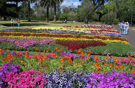 Head back to toowoomba for a day and chek out the GORGEOUS flower display