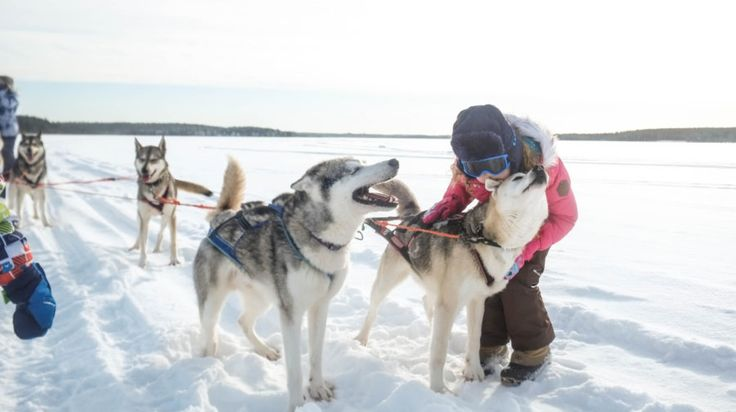 Hug and play with the huskies -Rovaniemi, Lapland, Finland