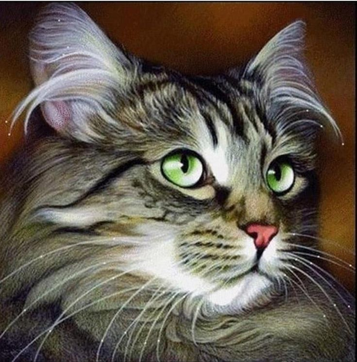 Main Coon Tabby Cat Diamond Painting Cat in 2019