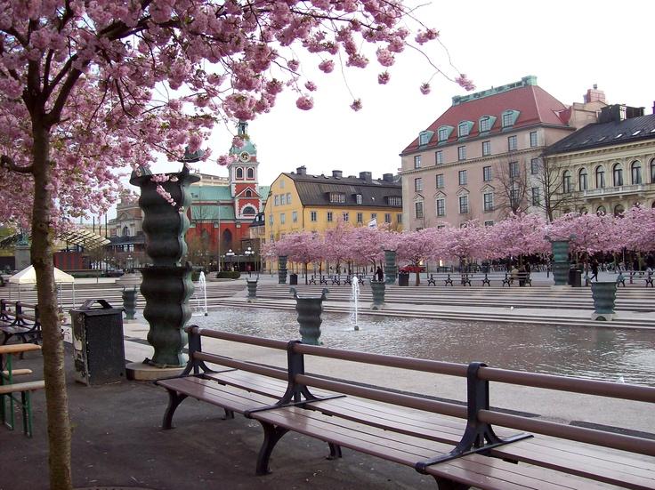 Blossomed_Stokholm