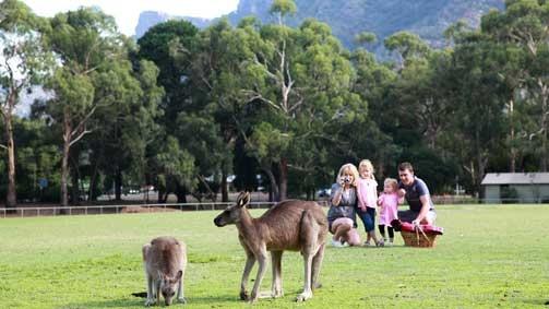 Family watching kangaroos in Halls Gap, Grampians, Victoria, Australia