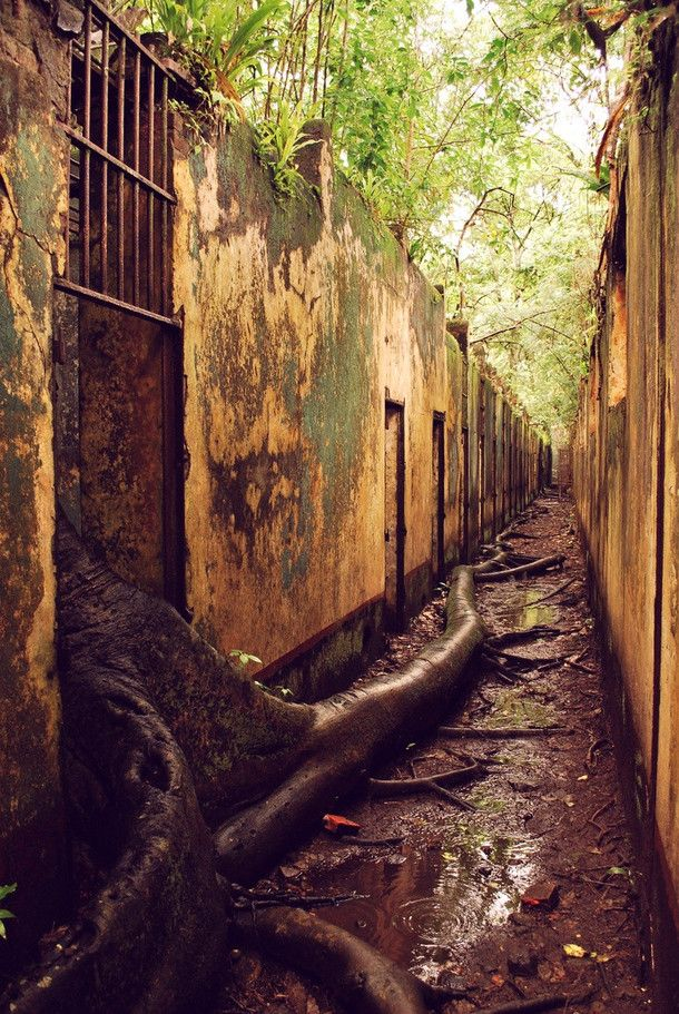 The abandoned prison complex on Isle St Joseph French Guiana the trees roots have made their escape