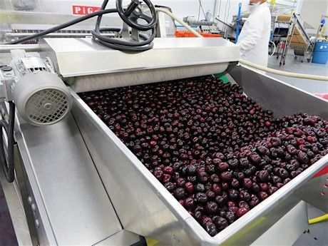 """We have a seasonal fresh cherry program and started with a year-round frozen cherry program in 2013,"" says Julie McLachlan with Jealous Fruits. ""For our fresh program, we have a <1 percent....."