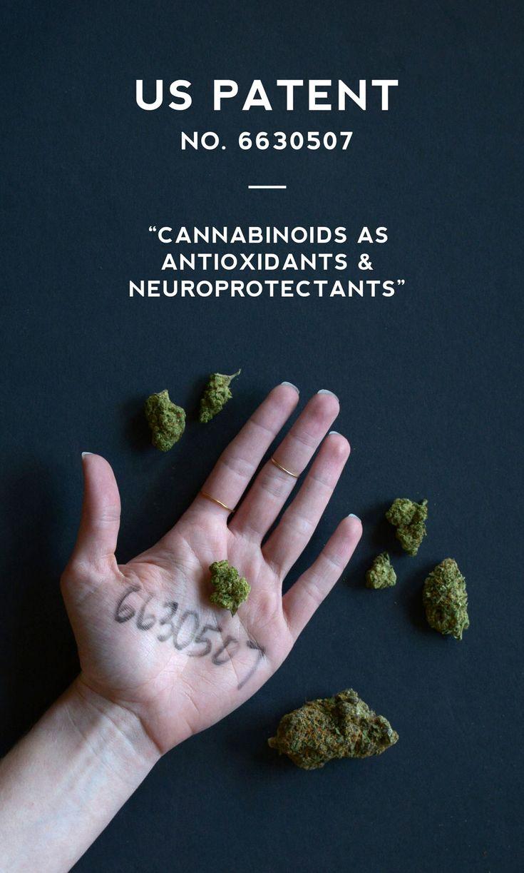 The United States Has a Patent on Cannabis - Kristen Williams Designs #cannabis #cannabiscleanse #6630507 #medicine #dea #antioxidants