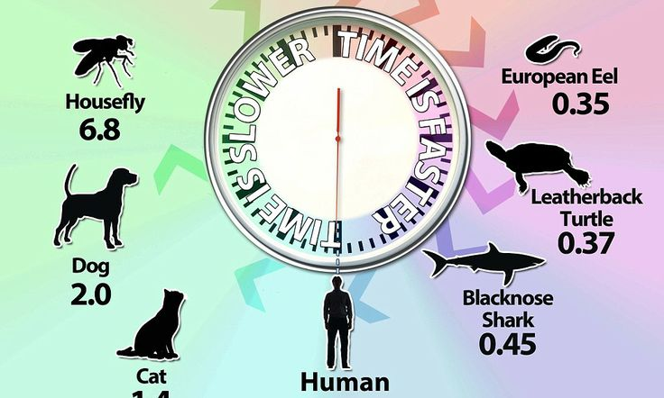 Research led by Trinity College Dublin suggests that time perception is related to a creature's size. Of course, time is really passing at the same speed.  But the fly's eyes send updates to its brain far more frequently than a human's eyes, and its mental processes are similarly much more rapid than ours.