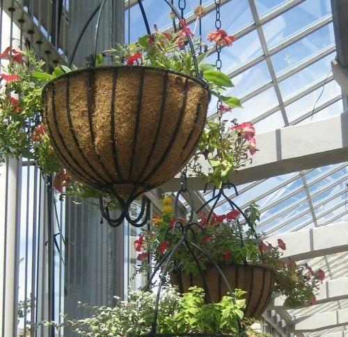 Como cultivar samambaias. As samambaias são lindas plantas de crescimento rápido que ficam muito bem no corredor de uma casa ou como protagonistas penduradas na decoração de um jardim. As samambaias são muito resistentes e pro...