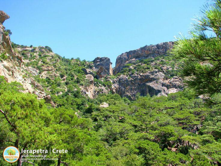Το καταπράσινο φαράγγι του Μυλωνά στον Άϊ Γιάννη !  The all-green #gorge of #Mylonas in Agios Ioannis !  Photo by Manos Perakakis, via @Visit Ierapetra   #ierapetra #Crete #IncredibleCrete #Nature