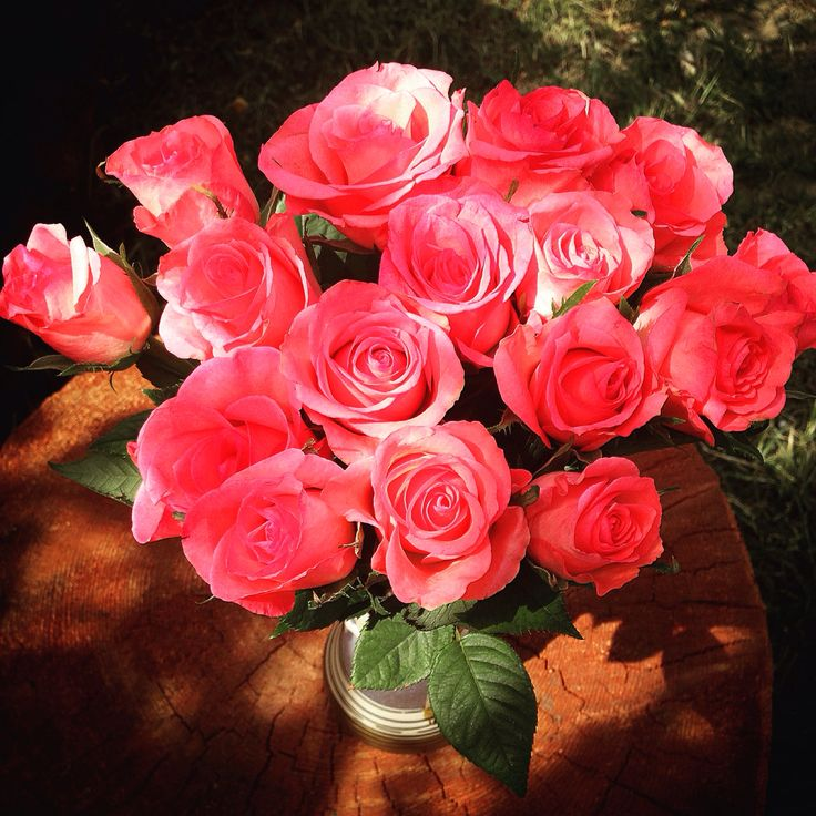 Roses #pinkroses
