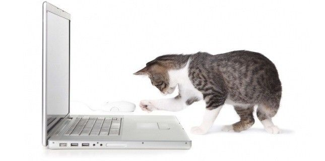 lol les chats aussi ont le droit d'évoluer un peu et d'utiliser les ordinateurs! ;)