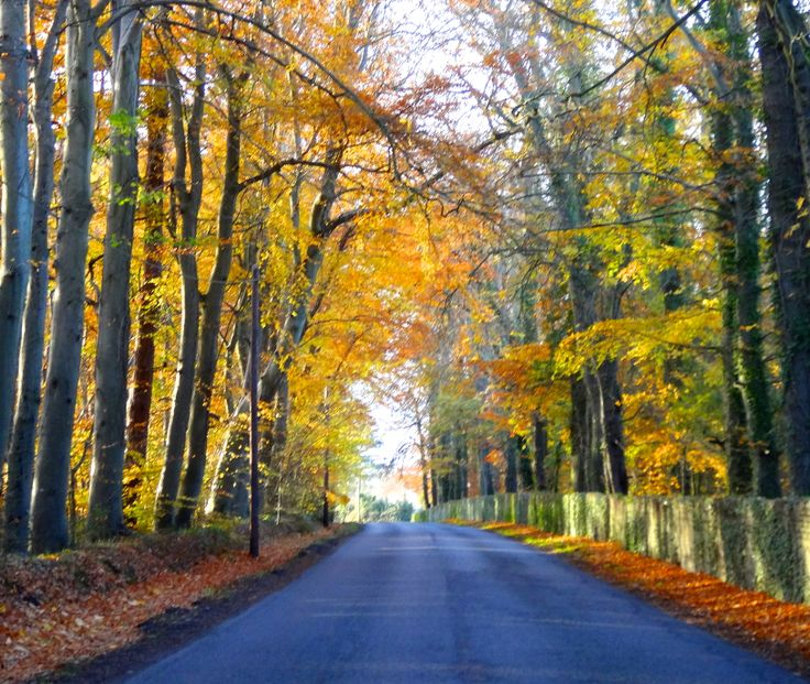 Autumn colour on the local Piltown road just took our breath away.