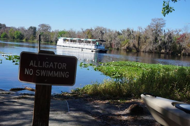 """Alligator no swimming"" sign at Blue Spring National Park Florida."