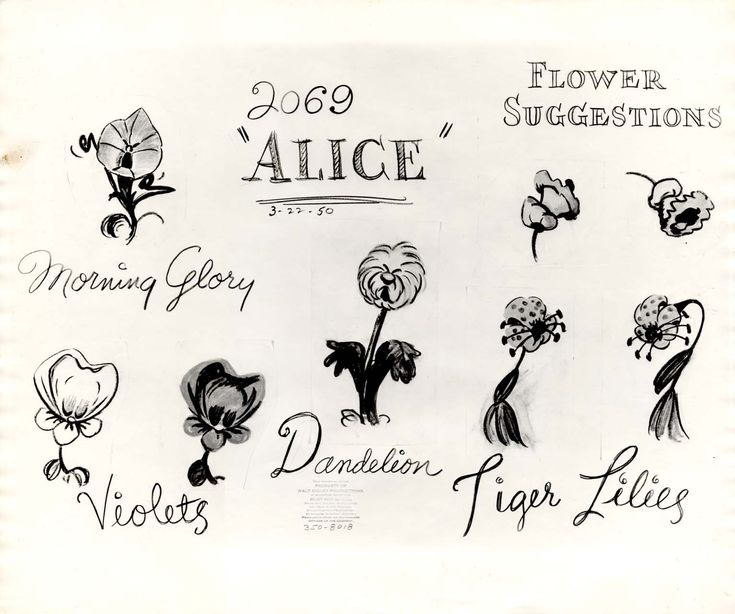 Vintage Disney Alice in Wonderland: Animation Model Sheet 350-8018 - Flower Suggestions...