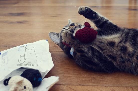 Ryś & new toys   #cat #cat toys