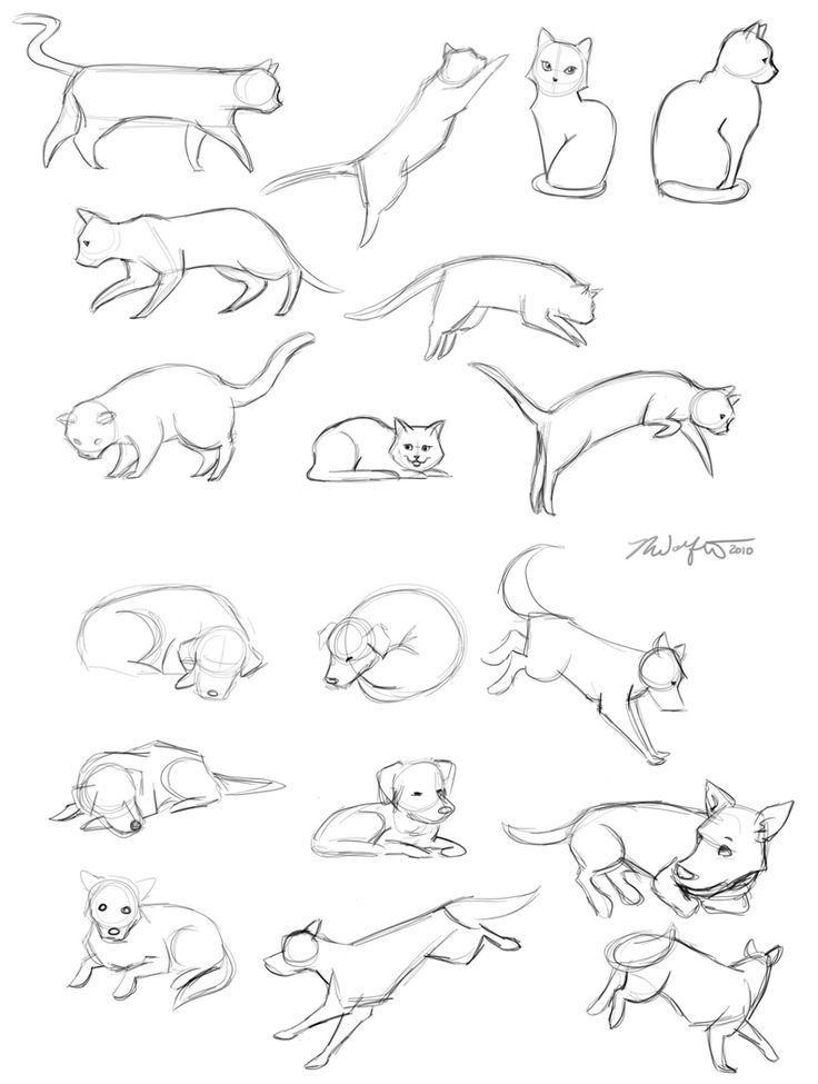 Image result for cat jumping down drawing | Referencias. anatomia ...