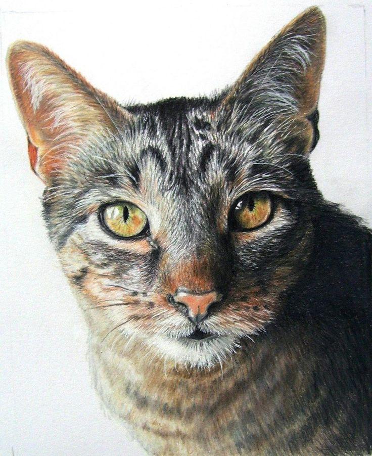портрет кошки картинки этом сообщили пресс-службе