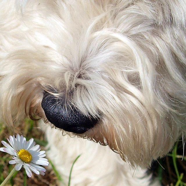 Makes me smile :-) #dog #pets #animals