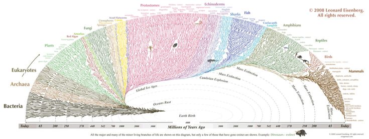 This Hypnotically Beautiful Chart Shows All Life On Earth - Business Insider
