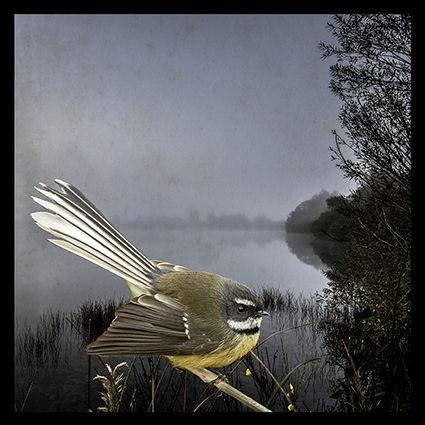 Fantail Fantasy by Christchurch photographer, Clive Collins. Available as canvas and paper artprints from www.imagevault.co.nz