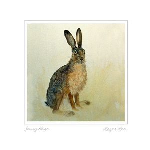 Young Hare greetings card by wildlife artist Roger Lee