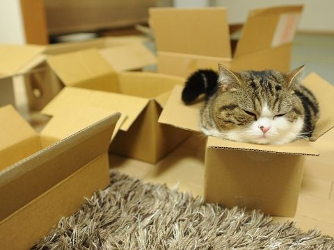 Maru.  The cat that is obsessed with boxes.  Look at her youtube videos soo cute and funny!