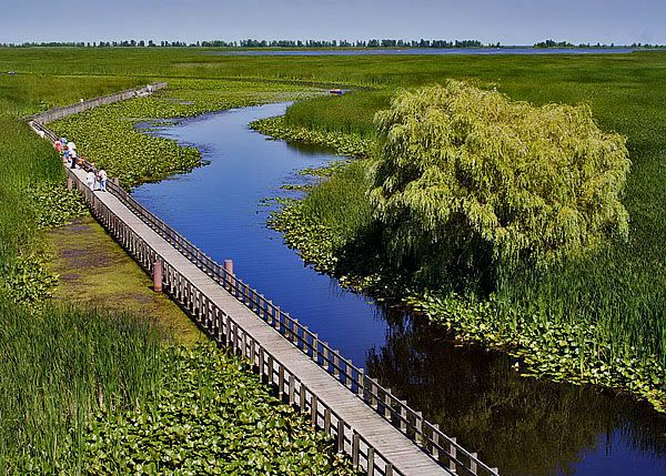 CHECK--Marsh Boardwalk, Point Pelee Provincial Park, Leamington, ON. Beautiful hotspot walk for birds, fish & turtles.