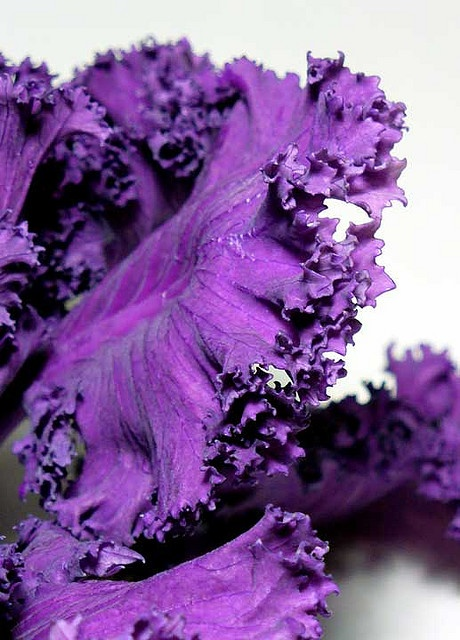 Purple kale: fiber, iron, Vitamin C and Vitamin K are just a few of the benefits of this pretty leaf! #VitaminShoppeContest