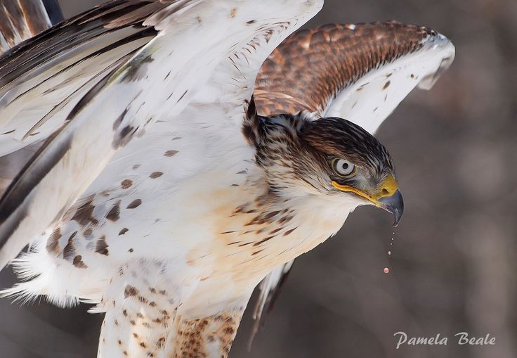 Falconry - Birds of Prey — Daytripper Photo