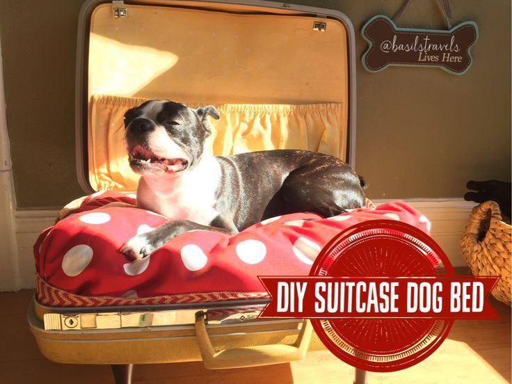 Best 25+ Suitcase Dog Beds ideas on Pinterest
