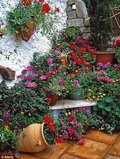 Perk Up Your Patio: Fancy A Riot Of Colour Right Outside Your Back Door All  Summer Long? Hereu0027s How To Create One