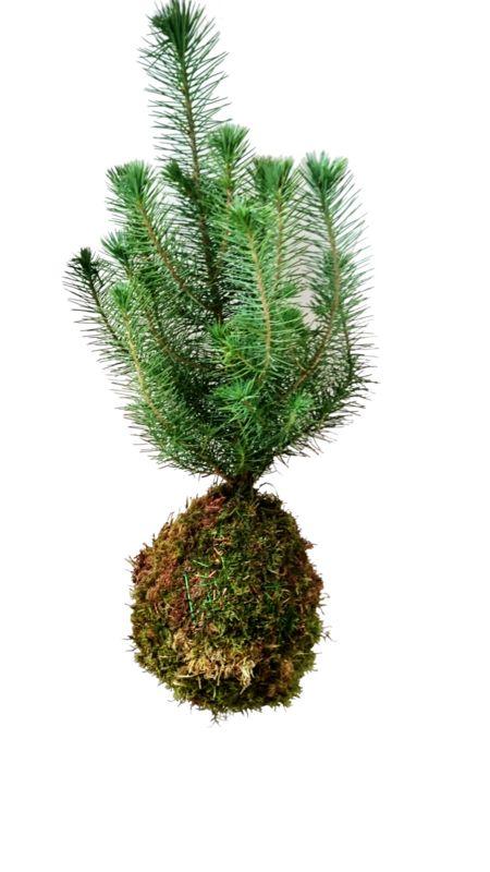 Een zwevende kerstboom! Nu nog de kerstballen uitzoeken :D