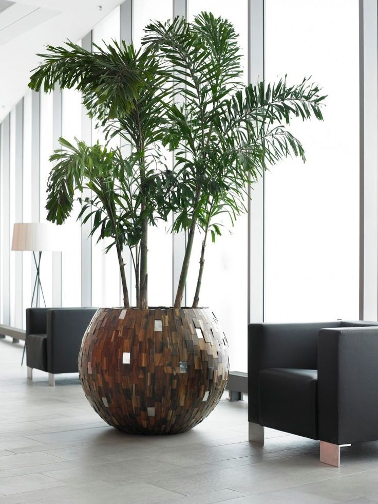 Give It An Exotic Ambiance With A Beautiful Tropical Palm In A Gorgeous  Plant Pot Of Sustainable Wood. Geef Uw Receptie Standing Met Deze Prachtige  ...