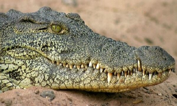 Остались только сандалии: крокодилы съели пастора, который шел по воде, как Иисус | Новости Украины, мира, АТО