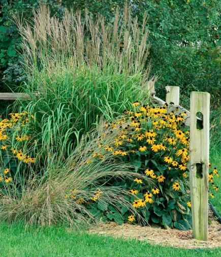 How to use ornamental grasses in midwest gardens gardens for Tall grass garden