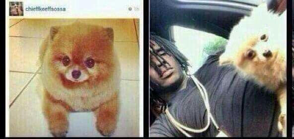 Oh hell no,  chief Keef has a Pomeranian