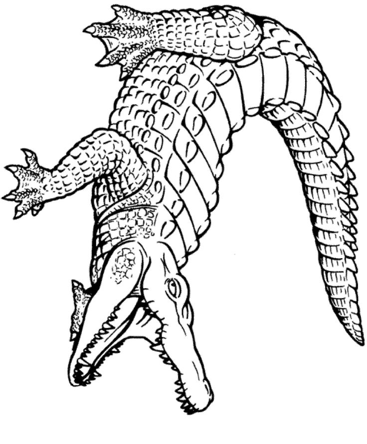 7 best images about gator tattoos on pinterest