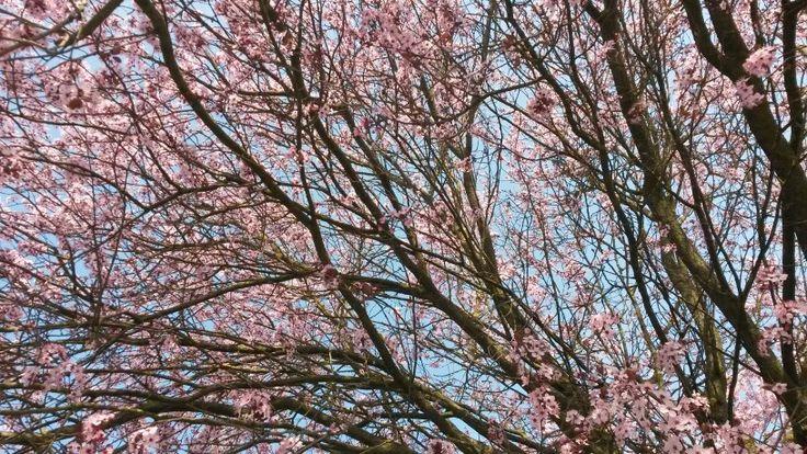 Sotto un cielo di primavera