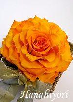 サマーアレンジ☆大きいサイズのローズを2輪使用して開花させてます。インパクトのある華やかなアレンジ。2012年7月