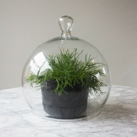 designer glass display dome