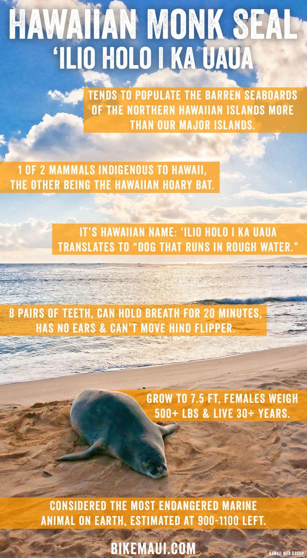 Hawaiian Monk Seal Facts