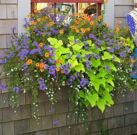 Would look great in large baskets or the deck ledge planters... hummm full sun? Shade?