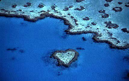 The Great Barrier Reef  Check out our Australia vacations here http://www.all-travel.com/destinations/australia/