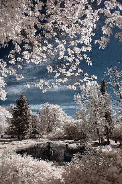 crisply white, crystalized lacey wonderland