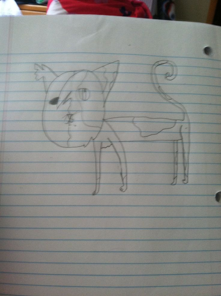 17 Best Images About Warrior Cat Drawings On Pinterest