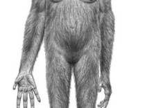 Top 10 Mysteries of the First Humans ~ Who was the first hominid? ~ Ardipithecus ramidus nicknamed Ardi