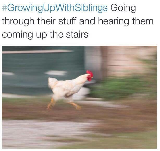 Best Growing Up With Siblings Images On Pinterest Funny Memes - 12 hilarious sibling pranks perfectly sum brotherhood