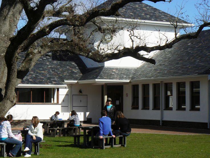 George Campus oak tree