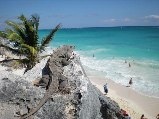 Chi è il guardiano di Tulum...? Lo ha incontrato BeppeCinque #messico #yucatan #twitpic
